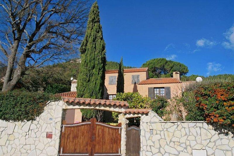 Le chêne de Provence; Auriol à Auriol - Image 2