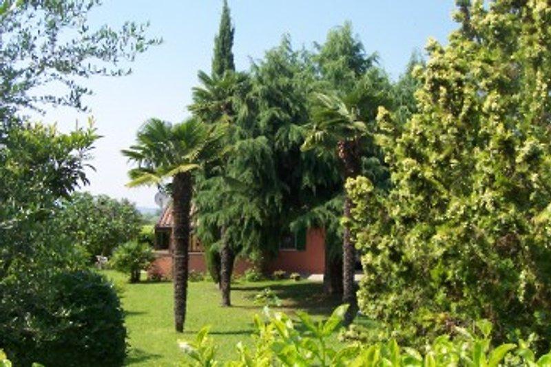 Blick auf unseren tropischen Garten (I)