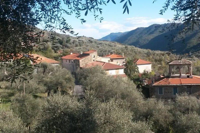 Blick aufs Haus vom Olivenhain