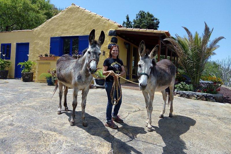 Mit den Eseln vorm Haus