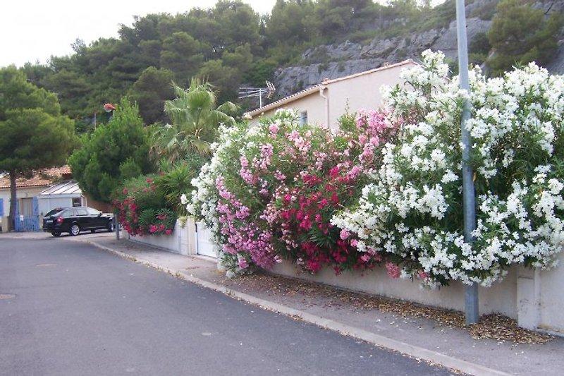 Zufahrt zu  Ferienhaus