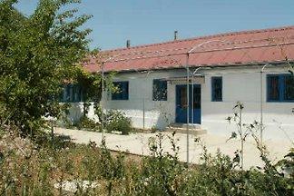 White Tailed Eagle Home