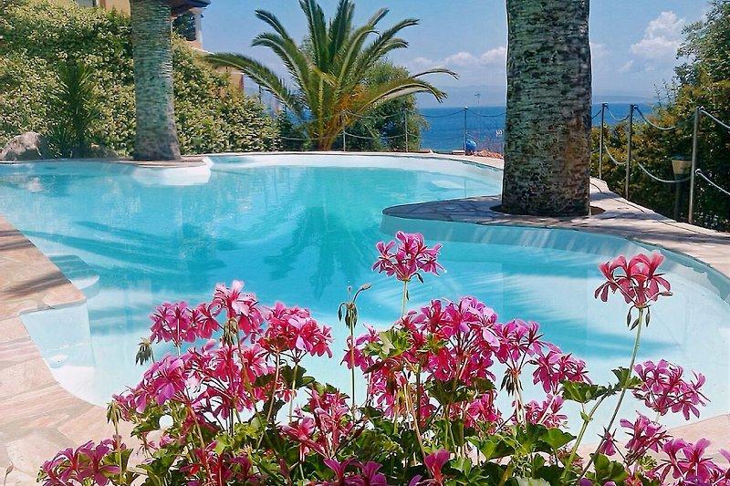 Der Pool von Villa  MALA