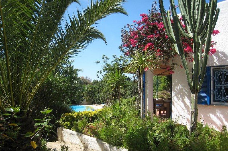 Durchblick vom Vordergarten zum Pool