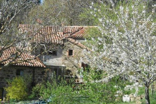 Lucashouse in Seggiano - Bild 1