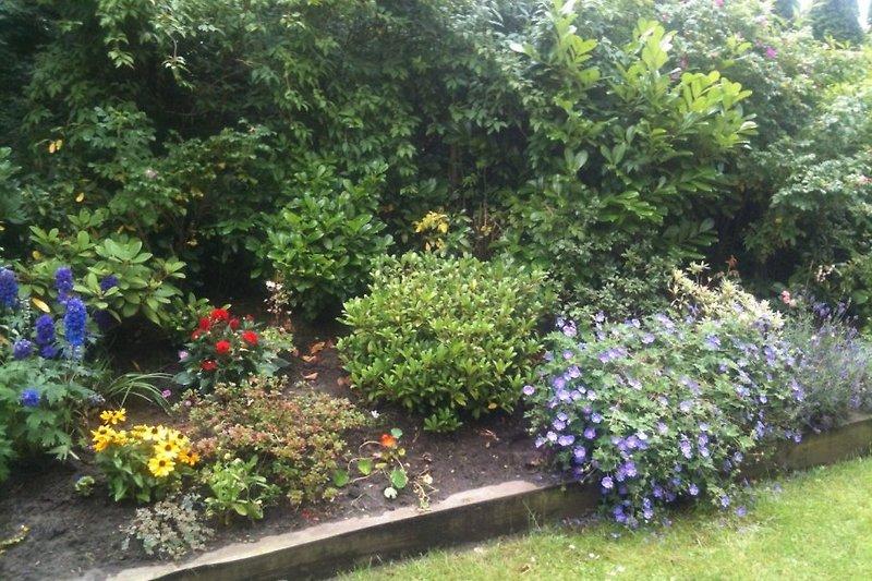 Wohnung Seestern Garten