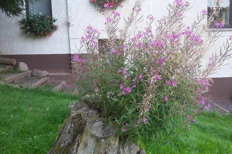 wilde Blumen auf dem Hof