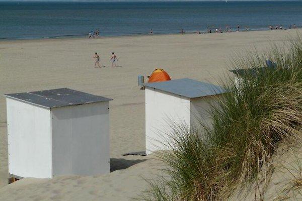 Maison 150m soupçon. le WLan des dunes à Nieuwvliet Bad - Image 1