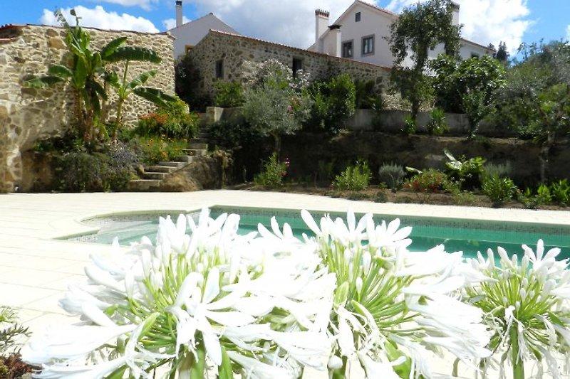 Ansicht Casa vom Pool
