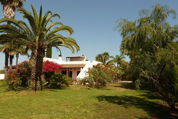 Casa Palmito à Luz - Image 1