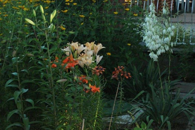 Garten am Haus