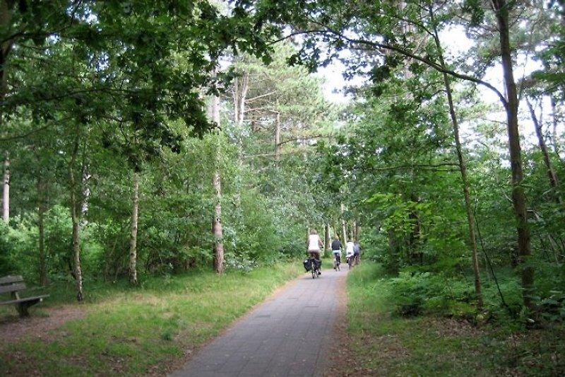 Fahrradverleih vor Ort