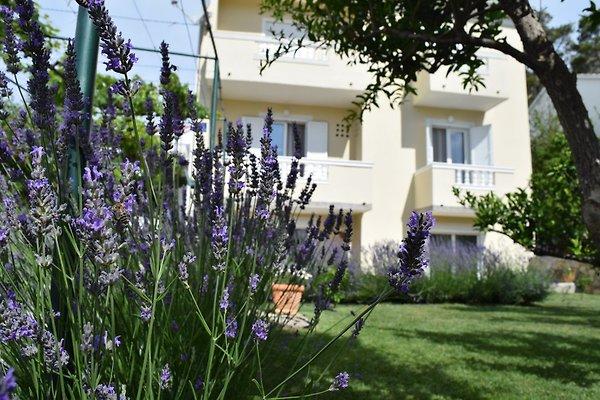 Appartamento *** / 8 + 2 BRANKA in Banjol - immagine 1