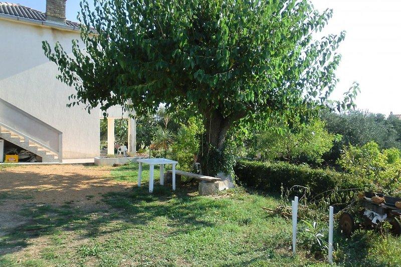Wohnung in Olivengarten: Garten nur fuer sie