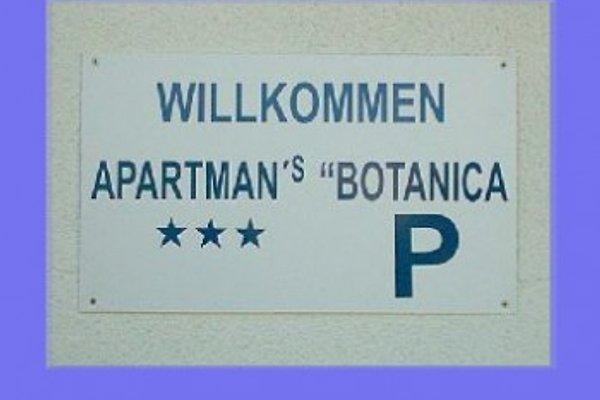Bungalow-Apartements Botanica à Vodice - Image 1
