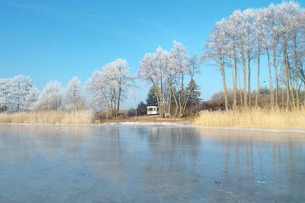 FeWoWald Schweriner-Seenplatte in Dabel - immagine 1