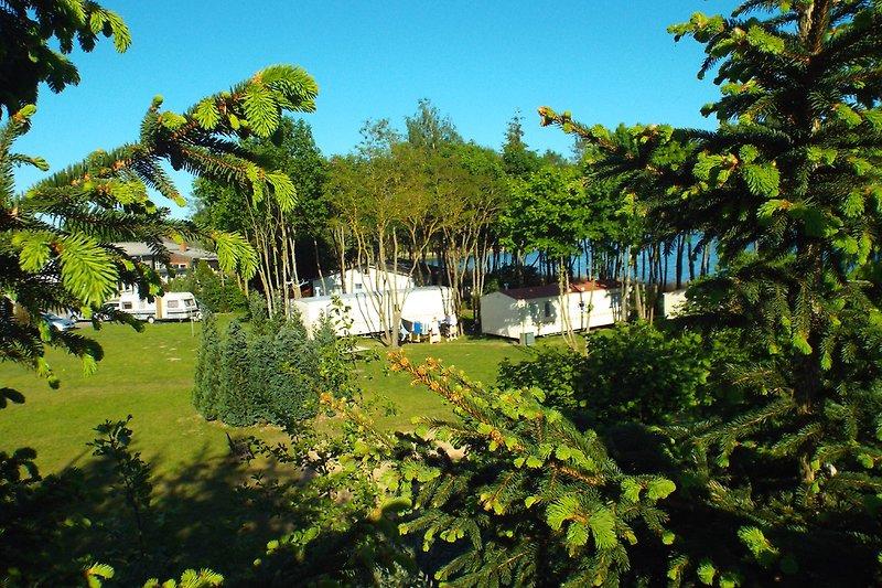 Mobilheim im Park