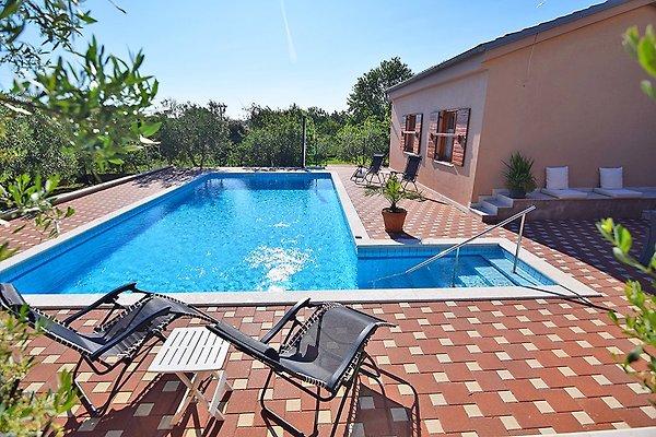 Pool von 50 m