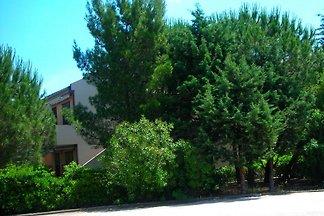 Casa tra i pini - Pine House