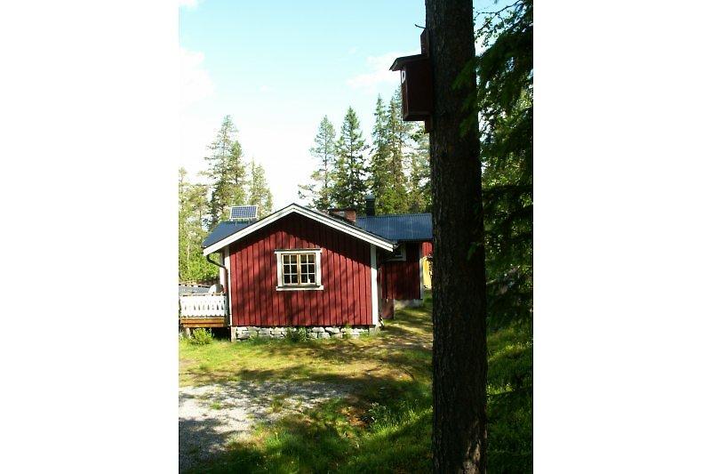 Das Haus befindet sich direkt im Wald.