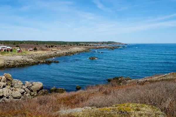 Sailor`s Rest House direkt am Meer in Cape Breton Island - Bild 1
