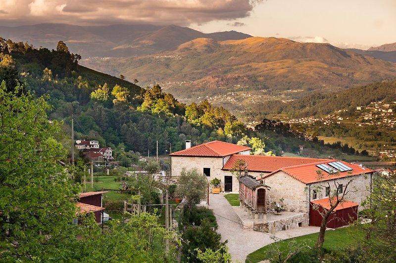 Quinta Olivia