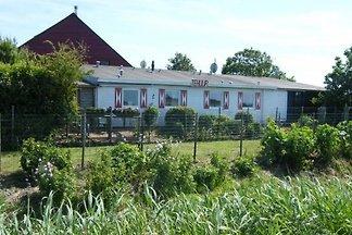 ZE182 - Ferienhaus im Moriaanshoofd