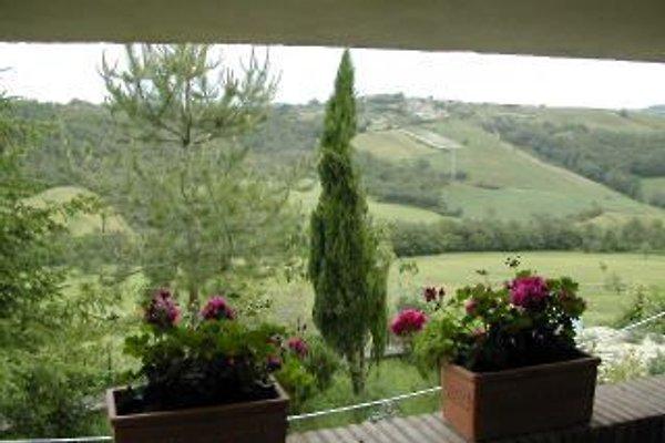 Bardanella in Allerona - immagine 1
