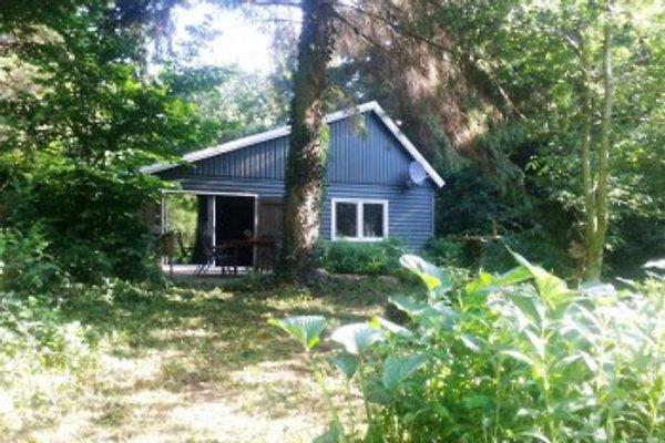FR119 , Ferienhaus im Wald. in Makkinga - Bild 1