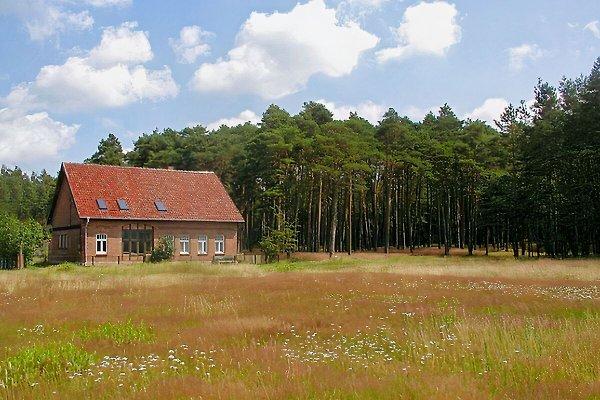Ferienhaus Waldhof in Hohenwoos Elbtalaue - Bild 1