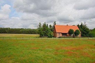 Ferienhaus inmitten von Wiesen und Wäldern in der Elbtalaue