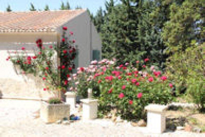 vordergarten