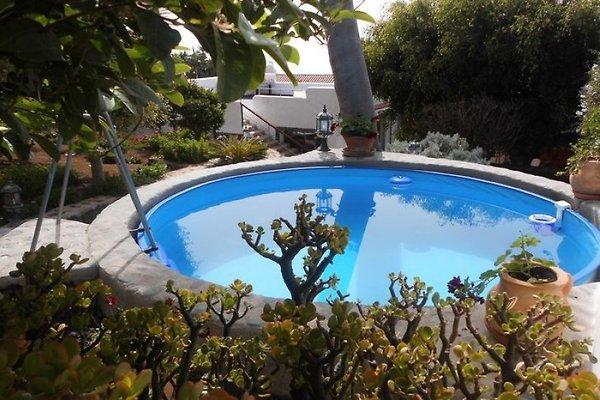 Der Pool- Finca Guave