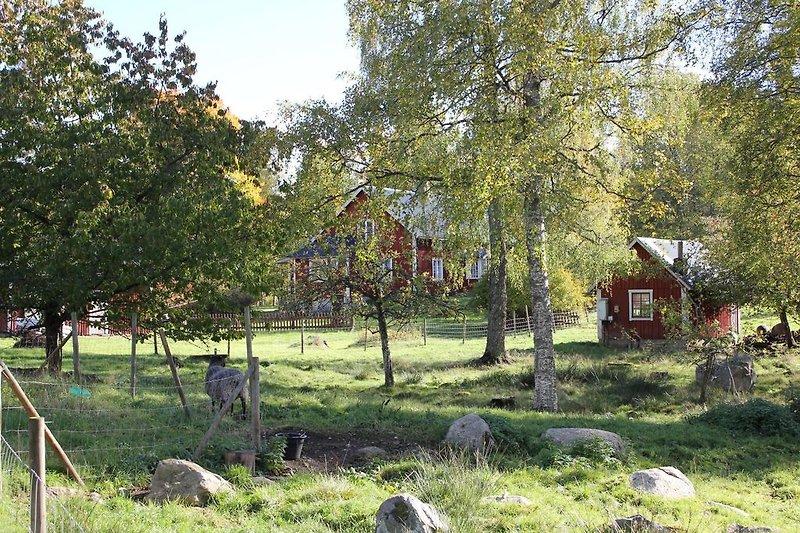 Haus von der Schafweide