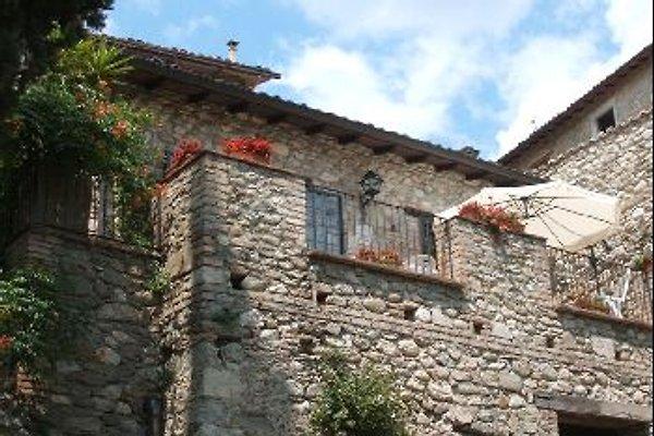 OLEARIUM en Montorio al Vomano - imágen 1