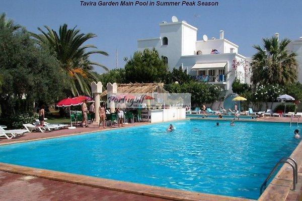 Haupt Pool bei Tavira Garden