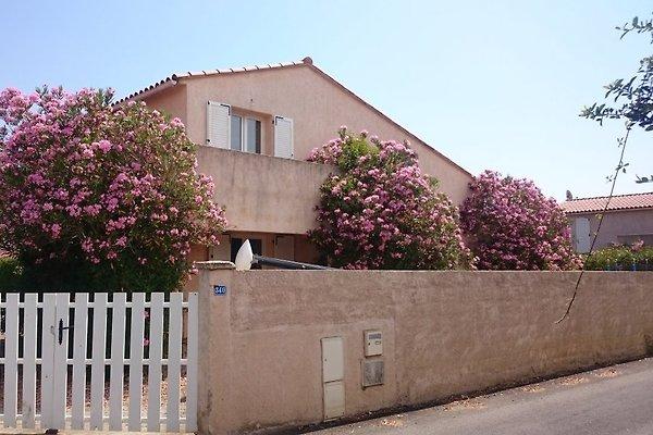 Cottage Villa Tulipier in Ghisonaccia - immagine 1