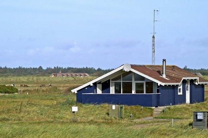 Blaavand, direkt an der Nordsee