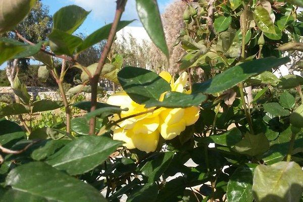 Eleni ferienwohnung in naxos mieten for Garten marmortisch