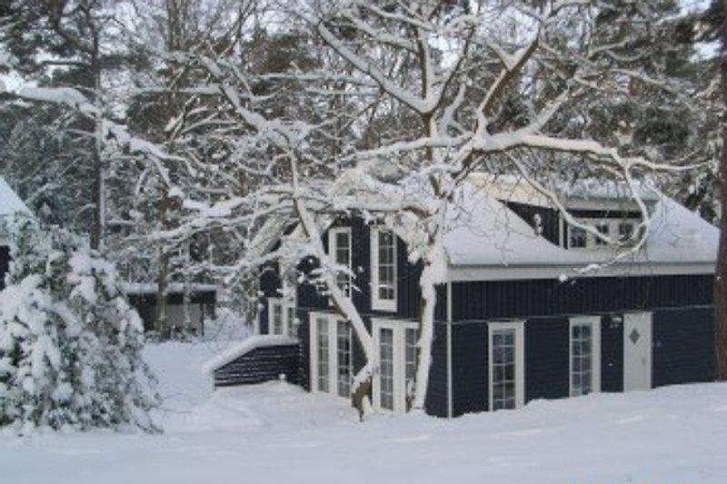Feenwald im Winter
