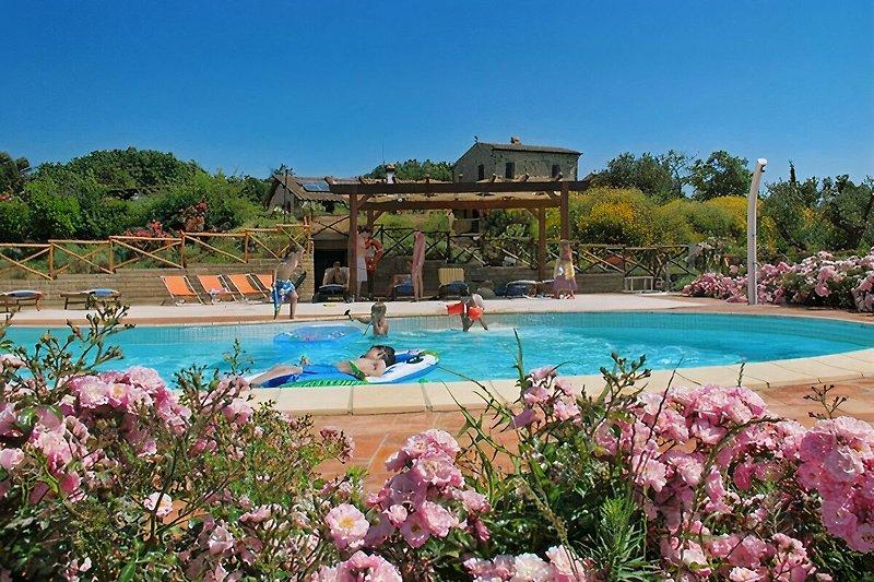 Der Pool ist von mediterranen Pflanzen umgeben