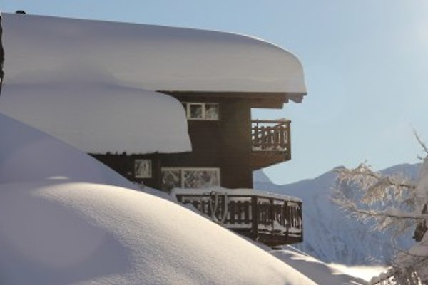 Rupicapra in Bettmeralp - Bild 1