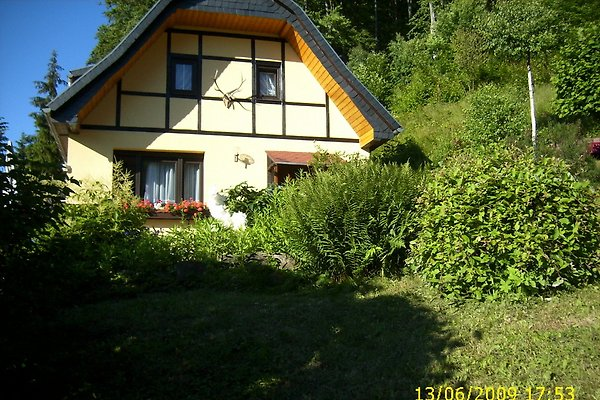 Birkenhain in Südharz - immagine 1