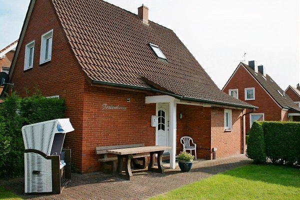 Ferienhaus Assing in Hage - Bild 1