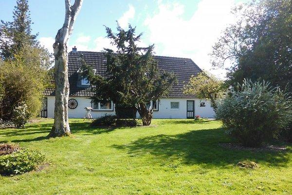 Ferienhaus Sonnenblume  in Oldenswort - immagine 1