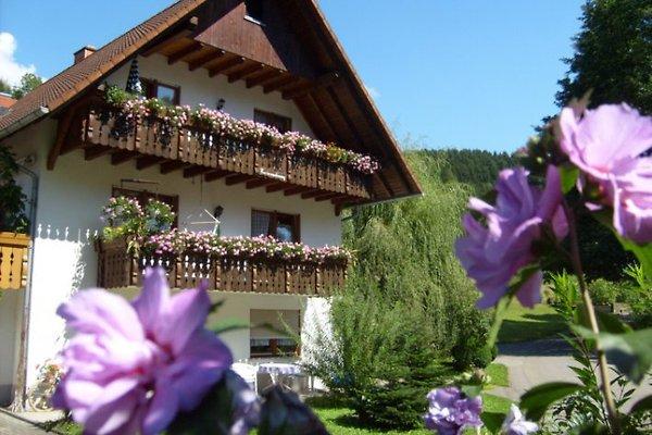 Ferienwohnung Furtwengler**** in Oberharmersbach - immagine 1