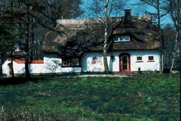 Reetdach Maler Bettermann in Winnemark - Bild 1