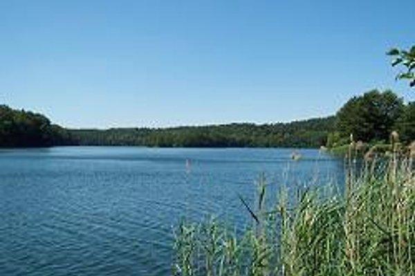 Ferienhäuschen direkt am See in Binenwalde am See - Bild 1