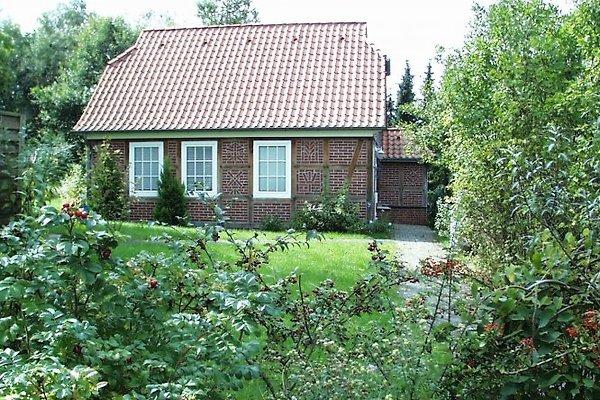 Ferienhaus an den Eichen in Hösseringen - immagine 1