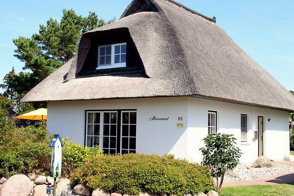 Möwennest     5 Sternehaus en Heringsdorf - imágen 1